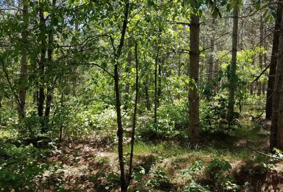 Petenwell Lake Area, 9.5 Wooded Wisconsin Acres
