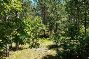 Lake Petenwell Area, 5 Wooded Wisconsin Acres!