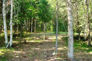Northwoods WI Lakefront Land for Sale, 1.2 Acres, Woods, 100′ Shore!
