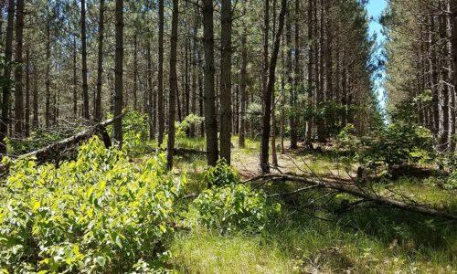 5 Acres, Adams County WI, Near Lake Petenwell!