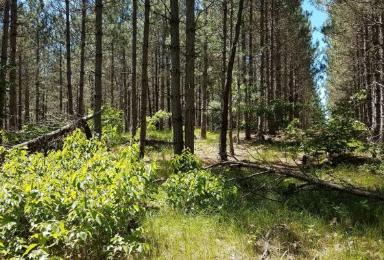 5 Acres, Adams County WI, Near Lake Petenwell!