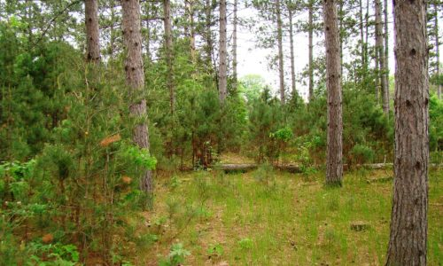 Central WI 7 Acres of Wooded Property!