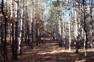 Central WI Camping or Cabin Property $17,900!