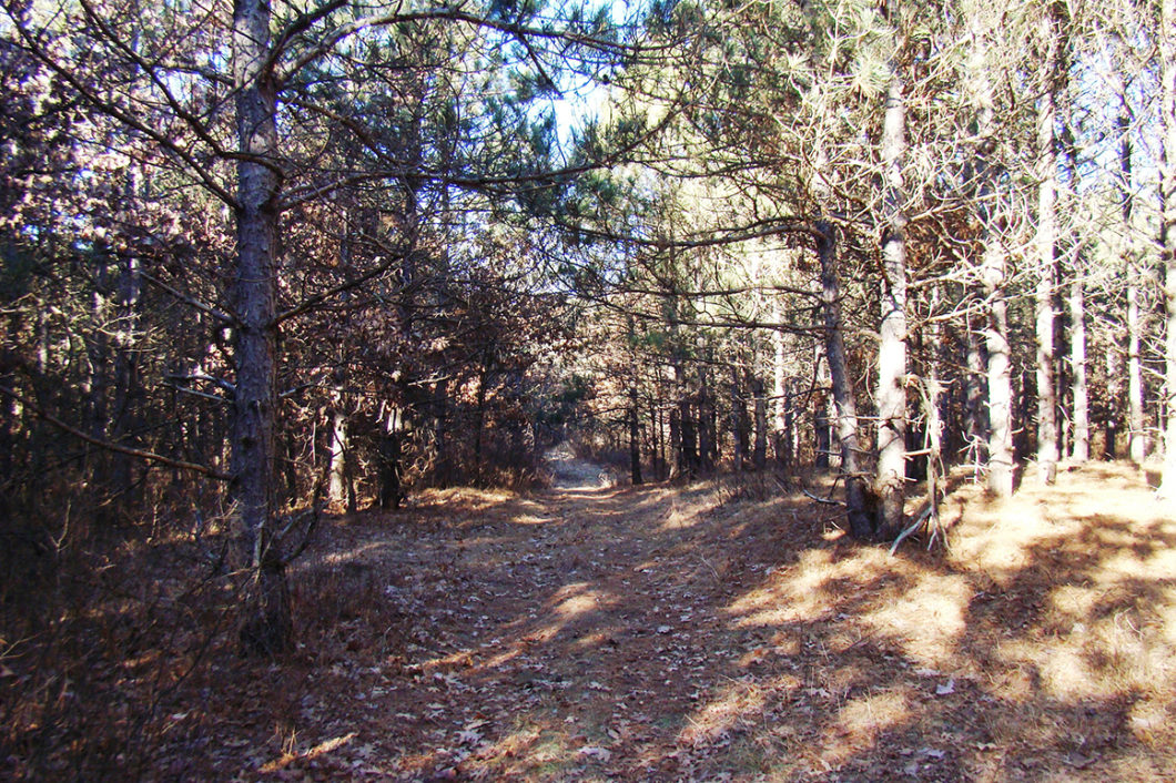 6.5 Acres, Adams County WI, Near Lake Petenwell!