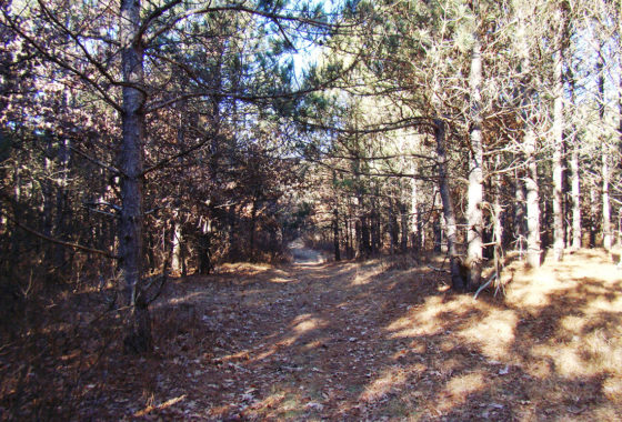 6.5 Acres, Adams County WI, Near Lake Petenwell!