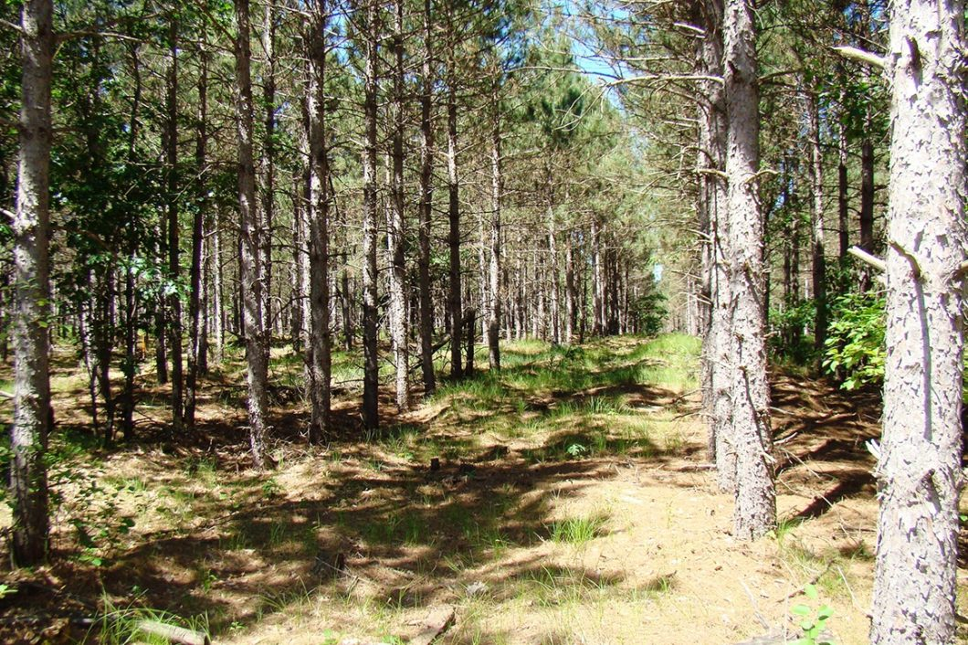 Central WI, Lake Petenwell 5 Acres of Wooded Property!