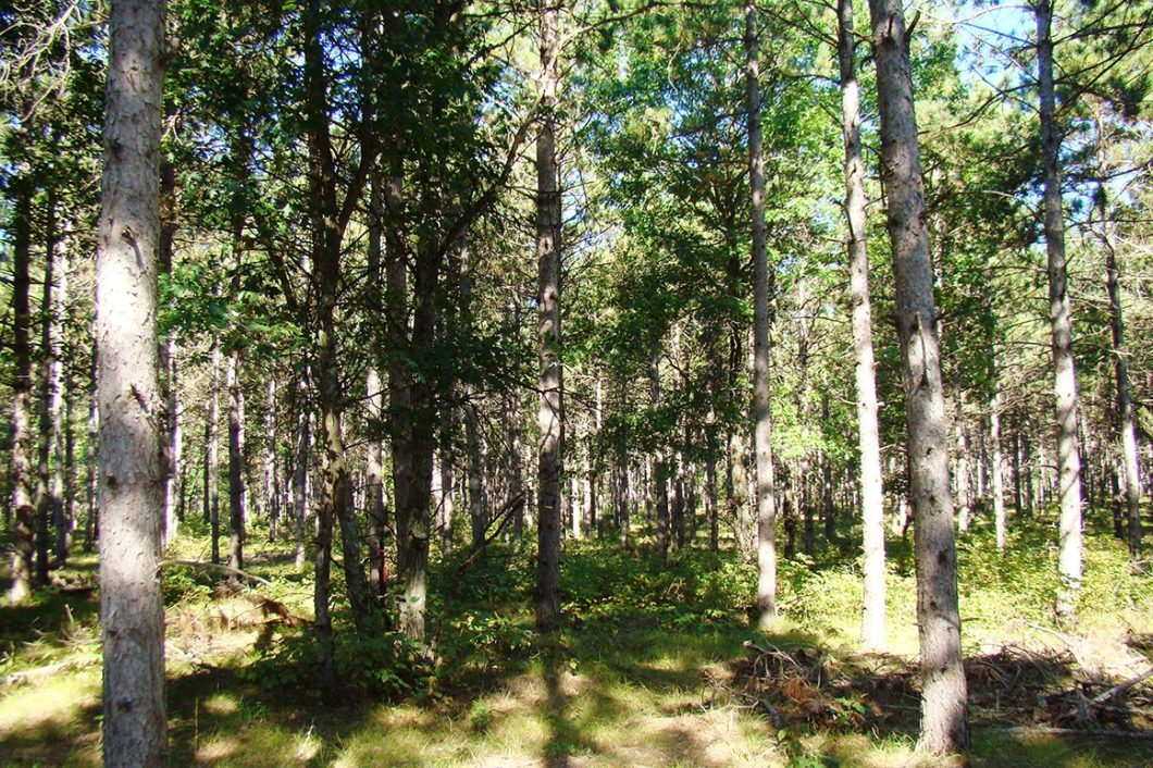 6 Acres, Adams County WI, Near Lake Petenwell!