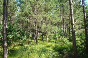 Northwest Wisconsin 3.7 Acres, Woods and Wildlife in Polk County!