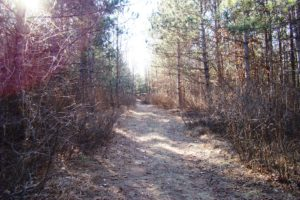 Adams County, WI – 1.5 Acres of Wooded Property & Lake Camelot!