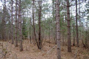 Northern Wisconsin, 10 Acres Woods, Lake Nokomis in Oneida County!