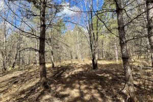 NW WI Land for Sale; 5 Acres, Woods and Wildlife by the Black Brook Flowage!