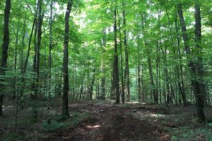 Forest County, WI Wooded Land for Sale by All Sports Lakes!