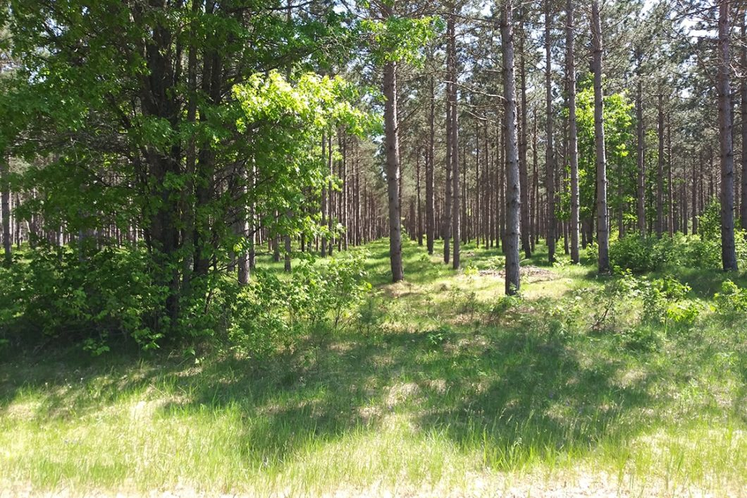 Wisconsin Woods for Sale, Lake Petenwell Area!