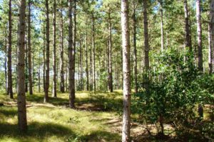 5 Acre Central WI Land for Sale, Camp or Build