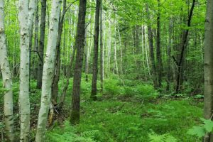 Lake Lucerne/Crandon, WI Wooded Camp/Cabin Site $19,900!