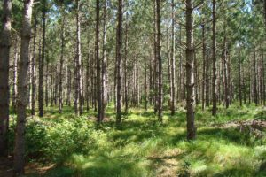 Northern Wisconsin, 10 Acres Surrounded by Burnett County Forest!