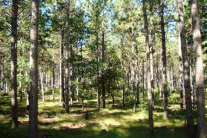Central Wisconsin 5 Acre Wooded Property near the Lakes!