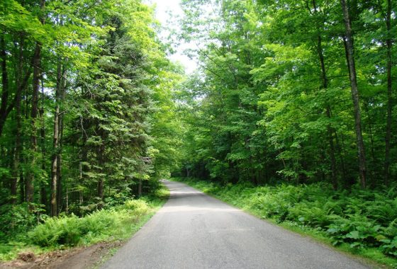 Northern WI, 4.3 Acres, Woods, Wildlife and Lily Lake!