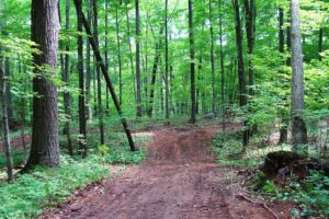 Northern WI, 4 Acres, Woods, Wildlife and Lily Lake!