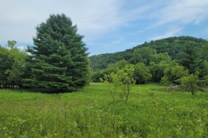 Southwest Wisconsin Trout Stream Property for Sale only $39,900!