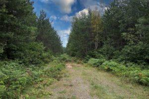 Oneida County Wooded Wisconsin Hunting Land near Lake Nokomis $29,900!