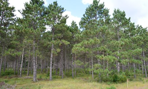 Adams County Wisconsin Woods Near Lake Petenwell!